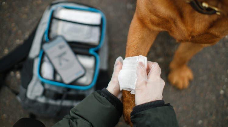 Ein verletzter Lauf? ImVerbandskasten von Meiko findet man alles inklusive App für die erste Hilfe im Hunde- oder Katzennotfall. (zvg)