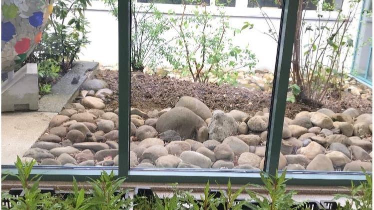 Pflanzaktion des Schulhauses Bannfeld in Olten