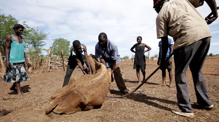 Afrika leidet gemäss Caritas besonders unter dem Klimawandel. Dürren und Unwetter sorgen häufiger für Ernteausfälle. (Symbolbild) (Keystone)