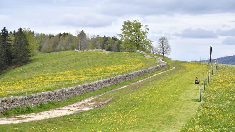 Die Steinmauer auf dem Probstenberg symbolisiert die Kantonsgrenze: links Solothurn, rechts Bern. (Bruno Kissling)