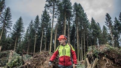 FörsterHans Rudolf Hochuli wird für Reitnau den Wald bewirtschaften. (Nadia Schärli / Luzerner Zeitung)
