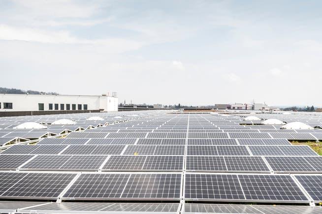 Solaranlagen wie jene auf dem Lidl-Verteilzentrum können mit Fördergeldern der Stadt unterstützt werden.