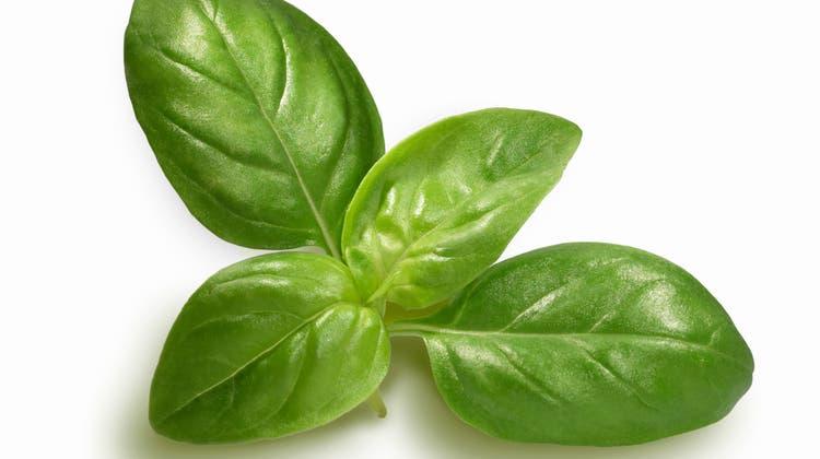 Königskraut Basilikum ist für sein ausgeprägtes Aroma bekannt. (Bild: Getty)