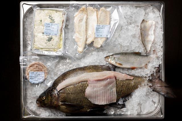 Alle wollen nur Eglifilets – mit einem Trick machen Fischer Konsumenten nun andere Fische schmackhaft