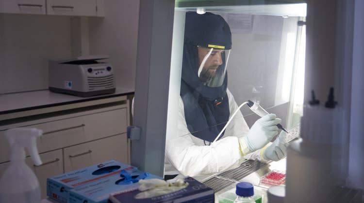 Hier infizieren Forscher menschliche Zellen absichtlich mit dem Coronavirus