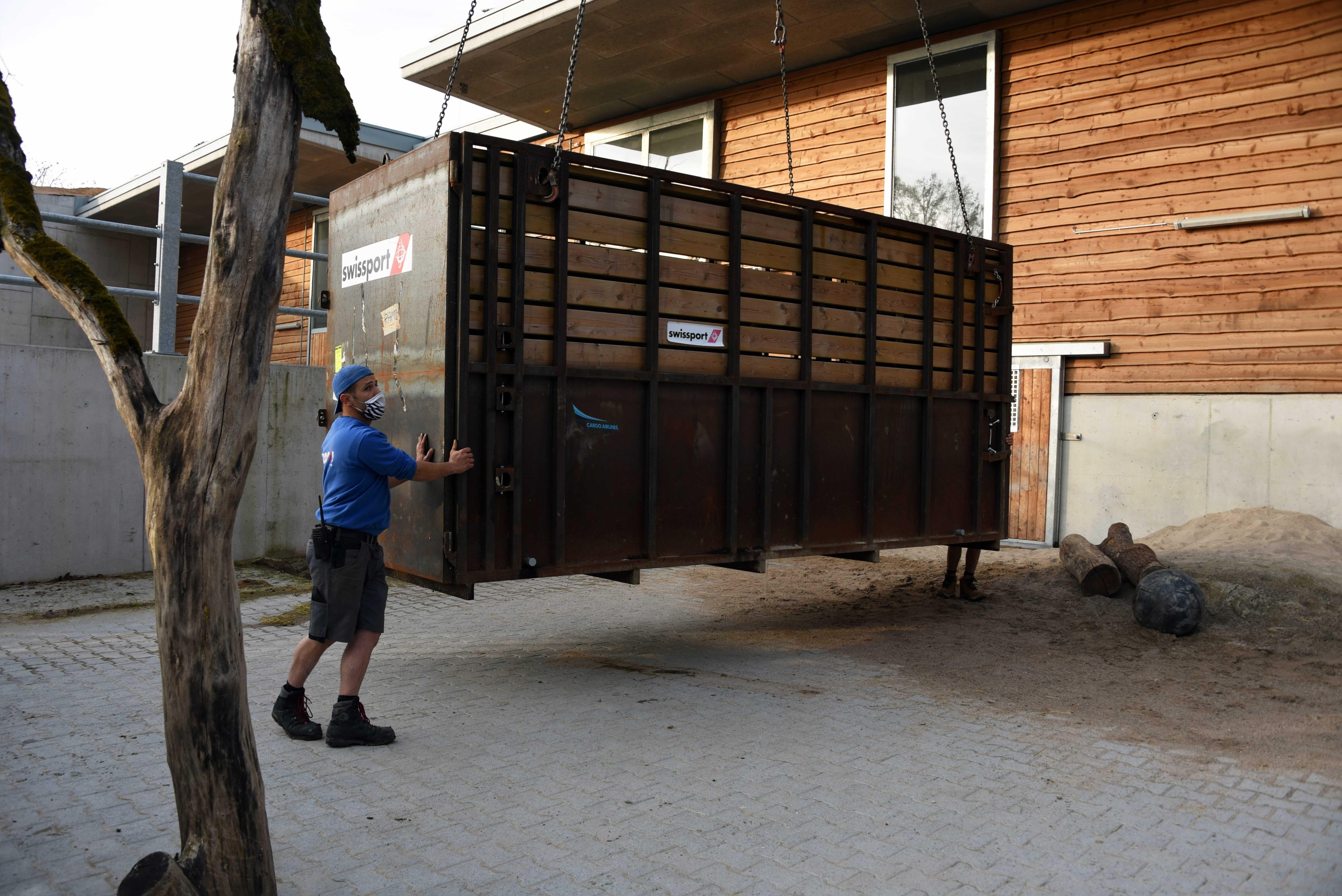 Die Nashorn-Transportbox: Der Zoo hat schon vor der grossen Reise mit Rami trainiert in die Box zu gehen, damit dieser sich schon daran gewöhnen kann.
