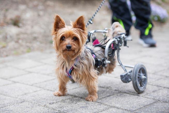 Happy mit ihrem Rollstuhl.