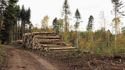 «Ich würde Käferholz in annehmbarer Qualität kaufen, doch die Wälder sind leer»: Säger suchen dringend Bauholz