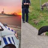Mit Fotos wie diesem präsentiert sich die Regionalpolizei Zurzibiet in den sozialen Medien. (zvg/Facebook)