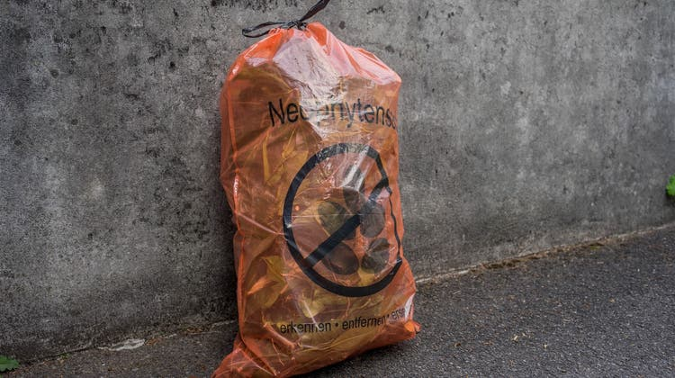 Dietwil stellt die Säcke für die Neophyten gratis zur Verfügung (zvg)