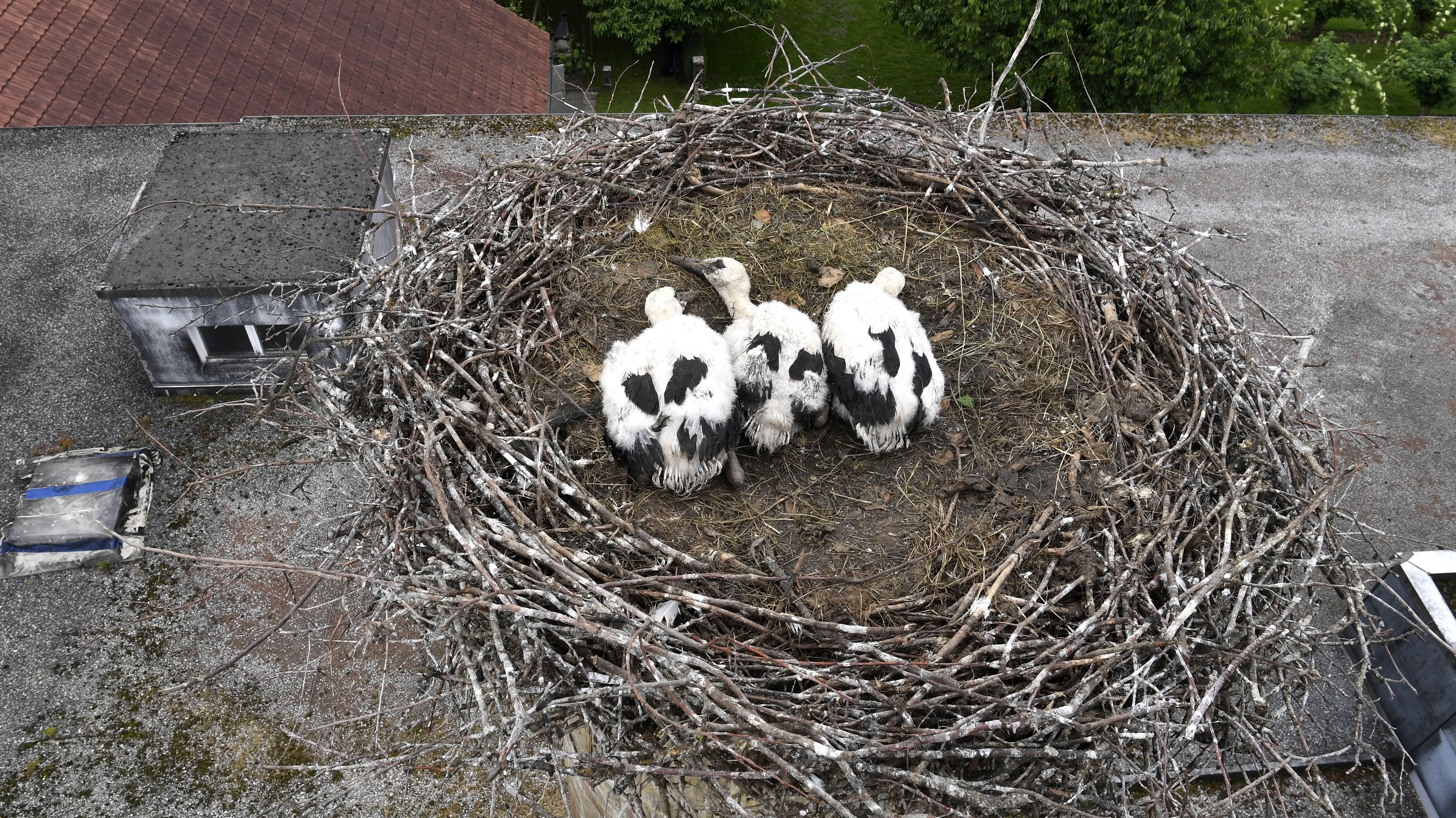 Diese schönen Tiere wohnen auf dem Kamin der Spezialitätenbrennerei Humbel in Stetten.