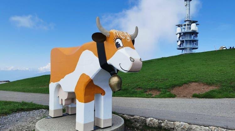 Die 2,50 Meter lange und 1,80 Meter hohe Kuh begrüsst die Besucher auf Rigi Kulm. (Bilder: Rigi Bahnen/PD)