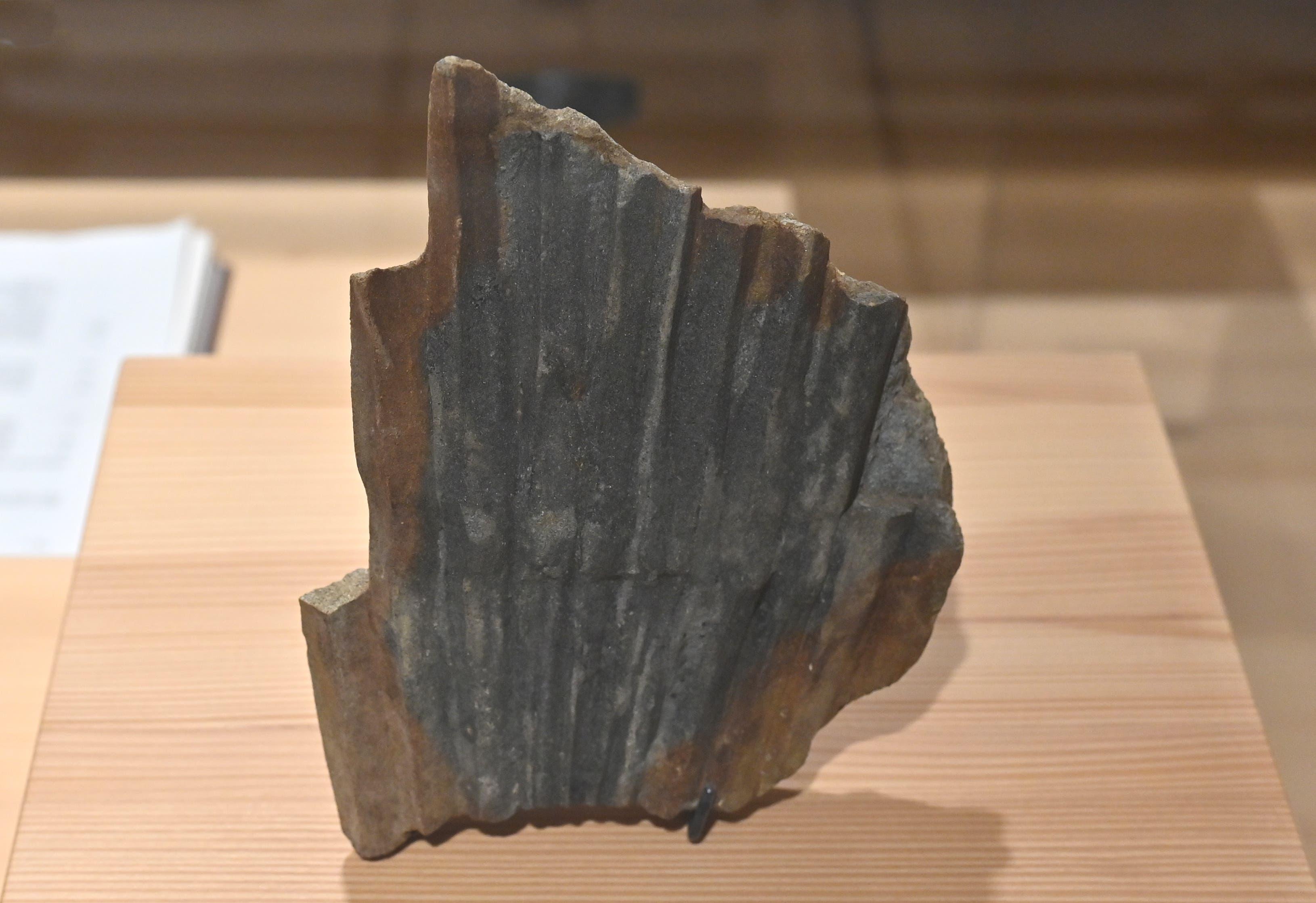 Dieses versteinerte Palmblatt zeugt von der subtropischen Vegetation vor 23,5 Millionen Jahren.