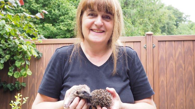 Eva Frei betreibt in Obermumpf eine Igelsäuglingsaufzuchtstation. (hcw (13. August 2020))