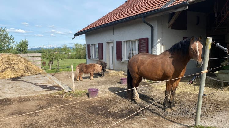 Pferdepension der Familie Jungo (Google)