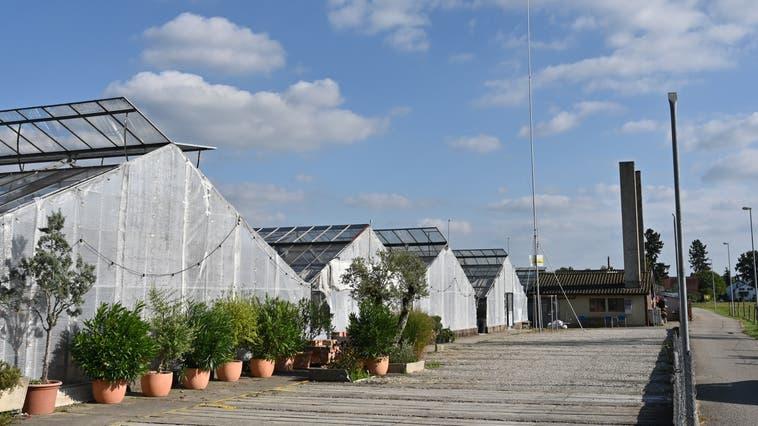Kann bei der alten Gärtnerei in Härkingen eine Mobilfunkantenne gebaut werden? Diese Frage ist noch nicht restlos geklärt (Archiv). (Bruno Kissling)
