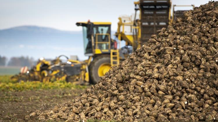 Die Schweizer Zuckerproduktion steht aufgrund eines EU-Entscheids unter Druck. (Symbolbild) (Keystone)