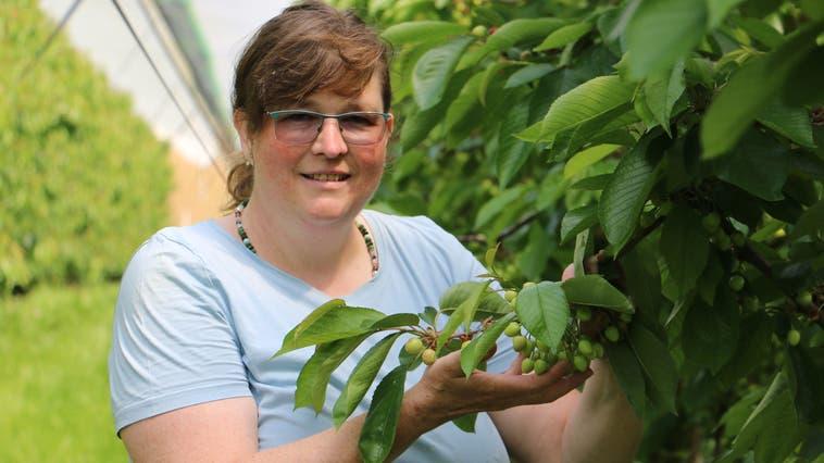 Die Kirschen von Regina Hort vom Kehrhof in Wittnau sind derzeit noch grün. (Dennis Kalt)