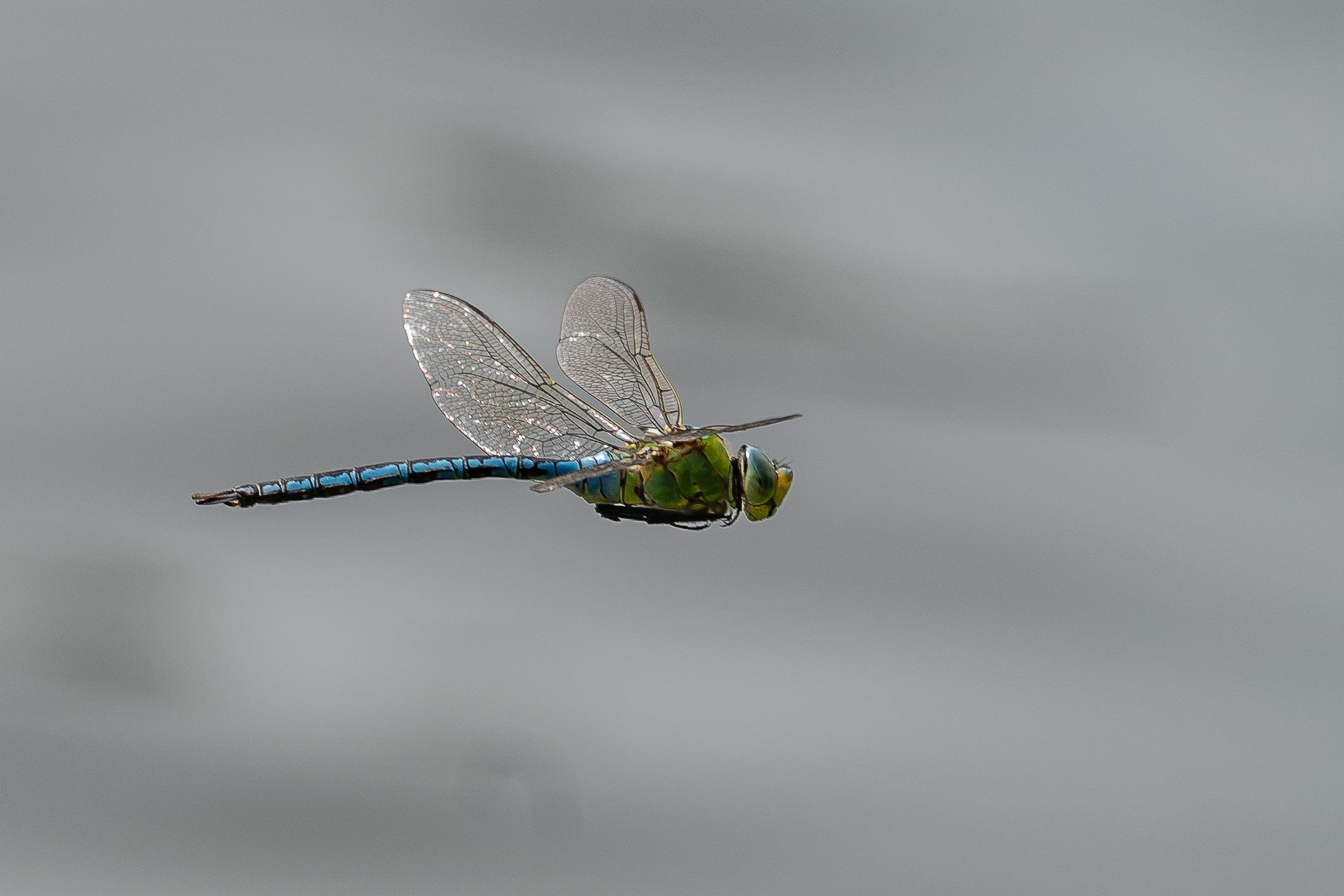 Flugwetter am Inkwilersee