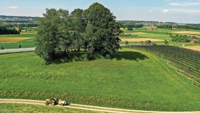 Die Gemeinde will einen Aussichtsturm errichten und diesen mit vier anderen Türmen im Thurgau verbinden