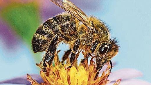 Neue Studie zeigt: Bienen leiden unter Alkoholentzug und zeigen ähnliche Symptome wie Menschen