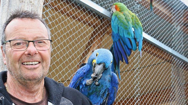 Nicht nur der blaue Ara auf seiner Schulter bereitet Rolf Lanz, Leiter des Vogelparks Ambigua, Freude – es sind auch die vielen Besucher. (Dennis Kalt / Aargauer Zeitung)