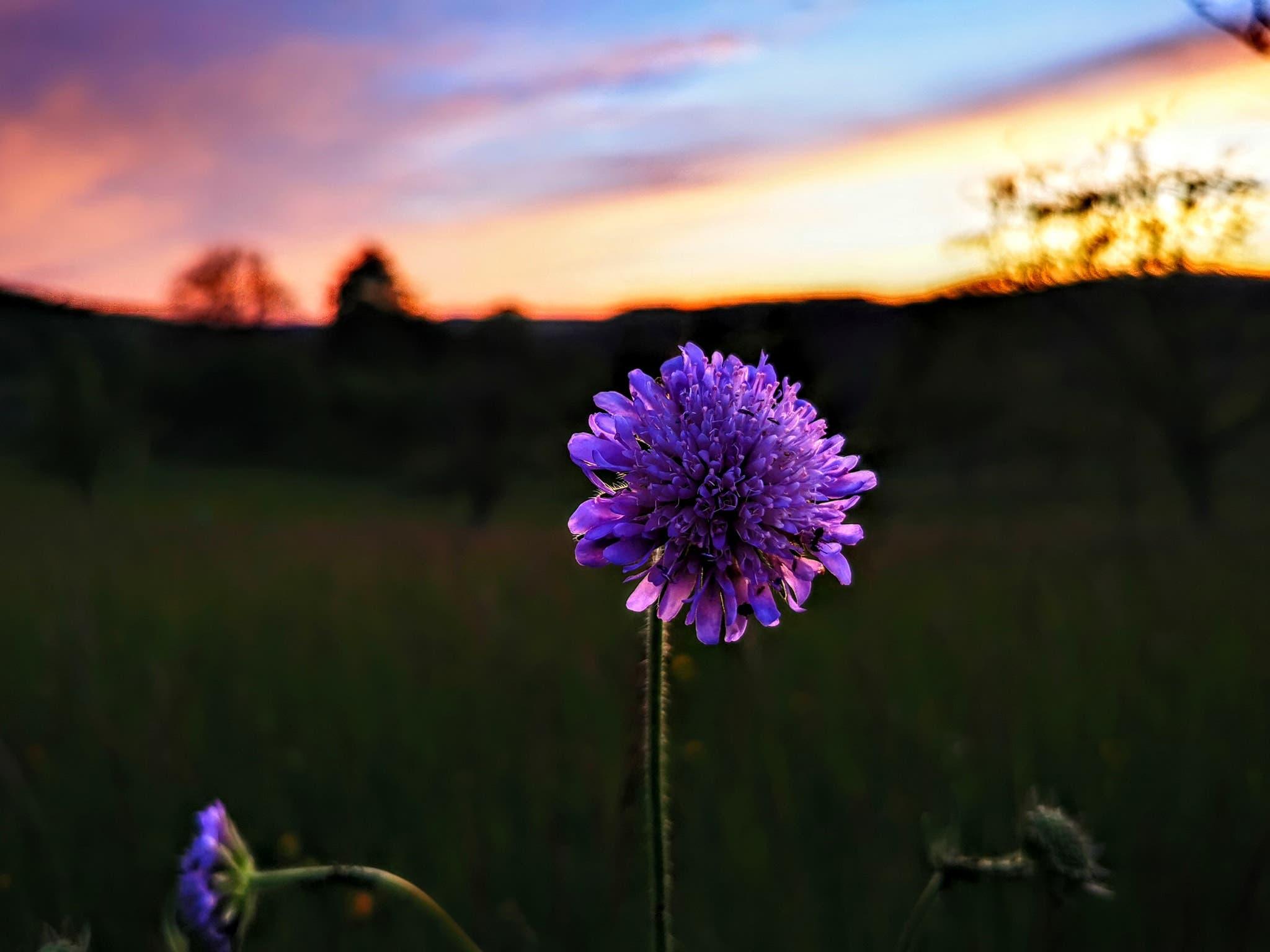Schöne Blumen und ein passender Himmel in Nusshof.