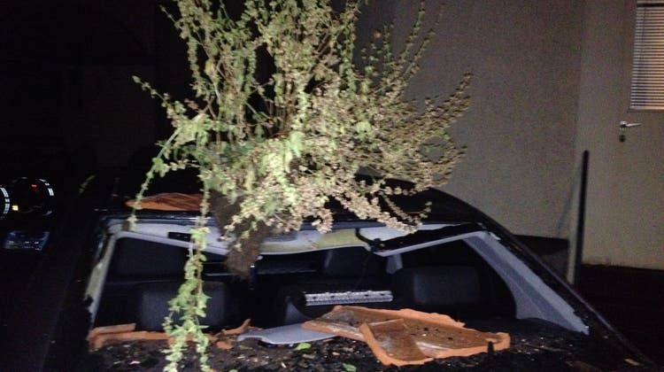 Es war einmal ein Basilikum: Überresten des Tontopfs und Totalschaden an einem Auto. (Bild: Jolanda Riedener (November 2016))