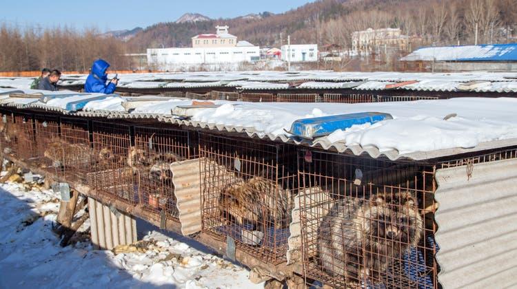 Eine Marderhund-Zuchtstation im chinesischenHengdaohezi. (EPA)
