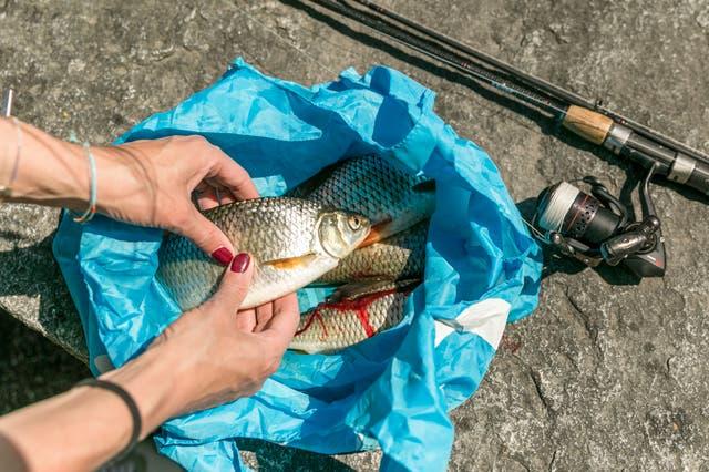 Die Fischerinnen: Wenn Frauen den grössten Brocken am Haken haben