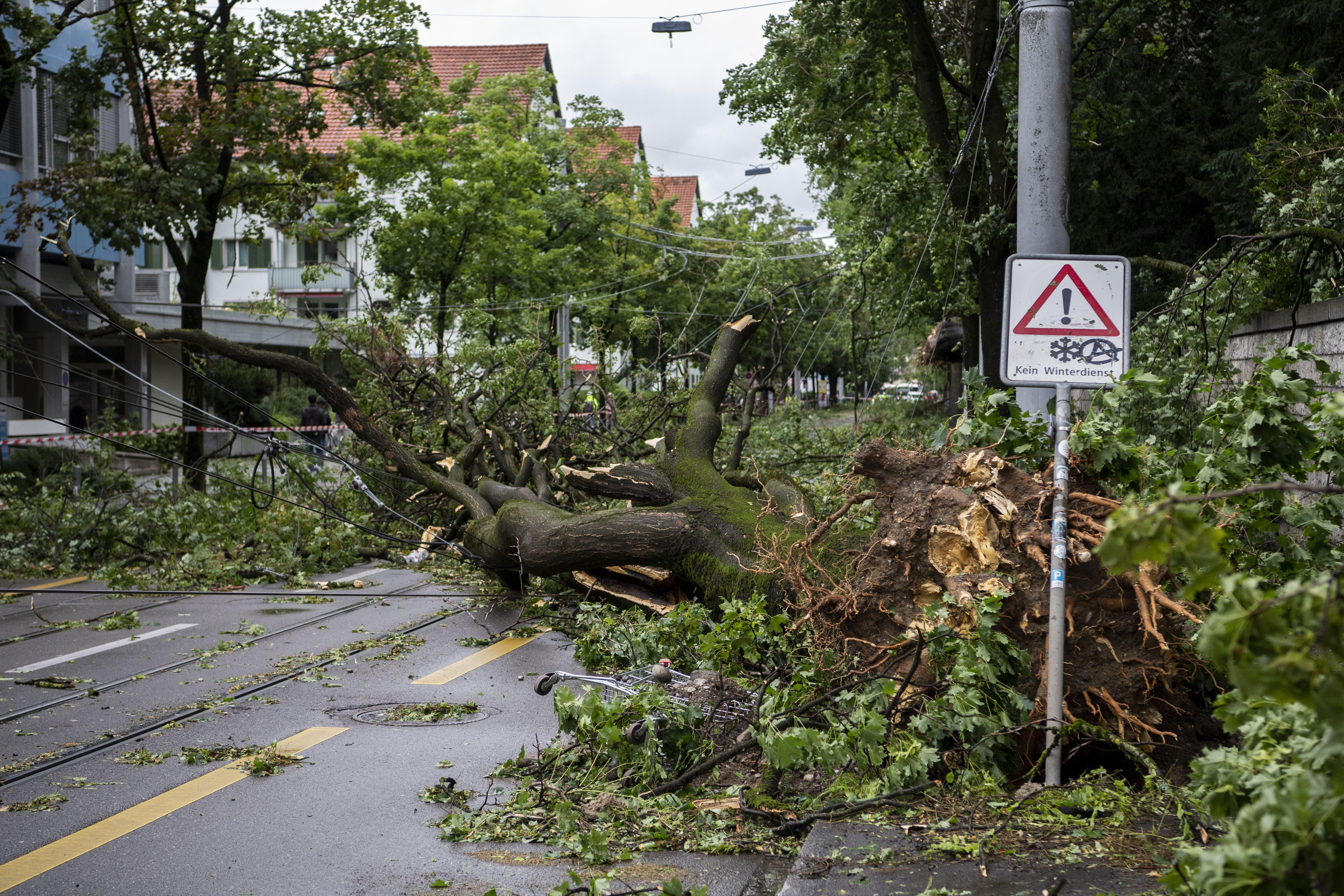 Auf den Strassen in Zürich liegen am Dienstagmorgen Bäume und blockieren Tramlinien. Das Unwetter in der Nacht auf Dienstag riss ganze Bäume samt ihrer Wurzeln mit.