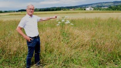 Thomas Peterhans, ehemaliger Direktor des Reusspark in Niederwil, zeigt auf das Feld, wo einst der Golfplatz entstanden wäre. (Toni Widmer)