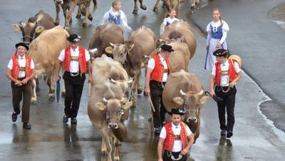 Die Viehschau in Wattwil 2019 bei Regenwetter. (Bild: PD)