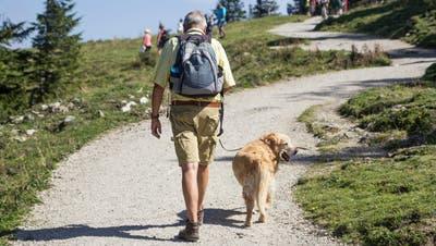 Was Sie beachten müssen, damit die Wanderung für Hundehalter und Tiere ein Vergnügen wird. (Bild: Getty)