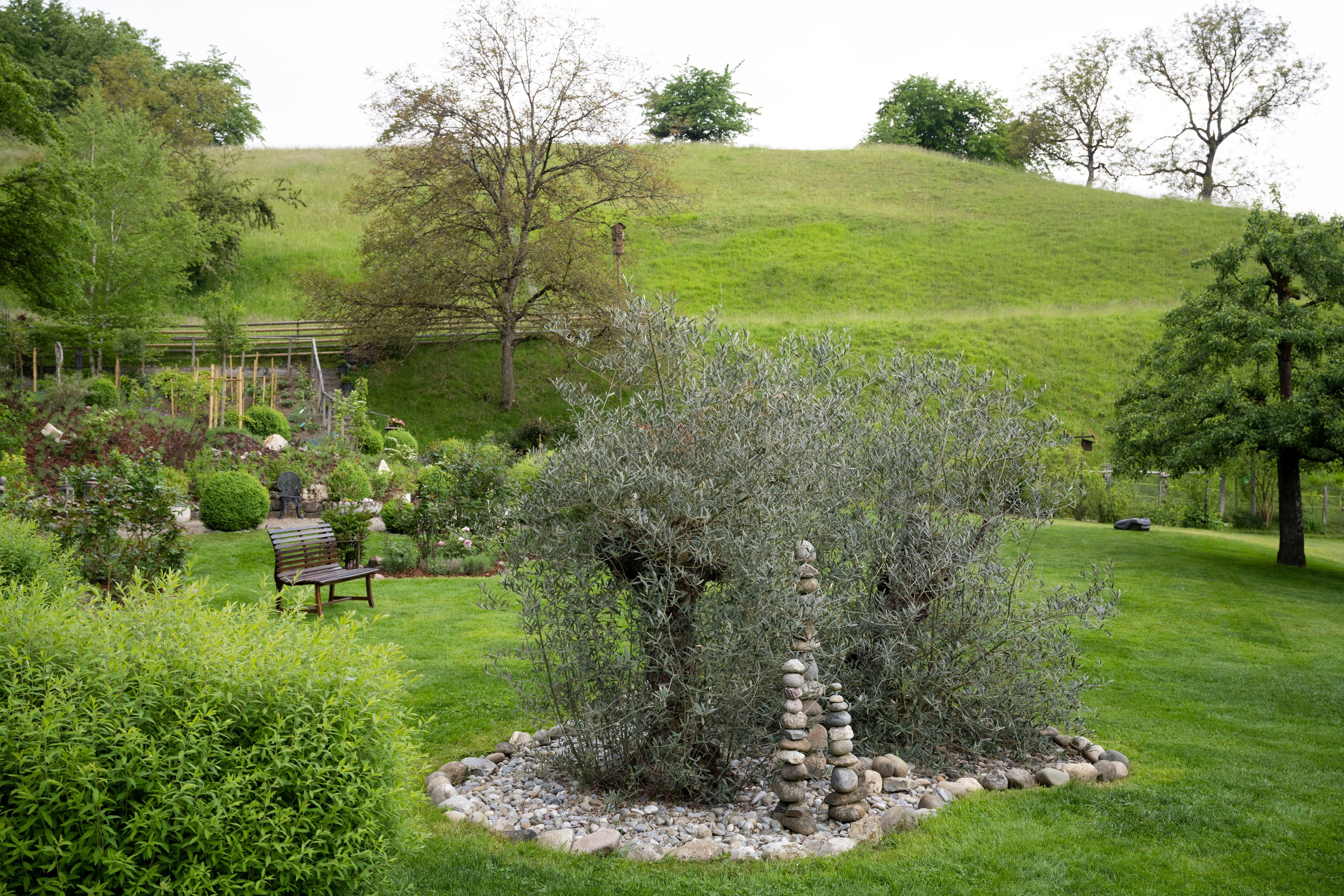 Im Garten pflanzten die Schlossherren unter anderem über 100 Jahre alte Olivenbäume. Sie müssen im Winter mit Flies geschützt werden.