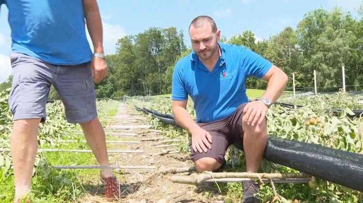 Ihn traf der Sturm doppelt: Obstbauer verliert nahezu komplette Ernte