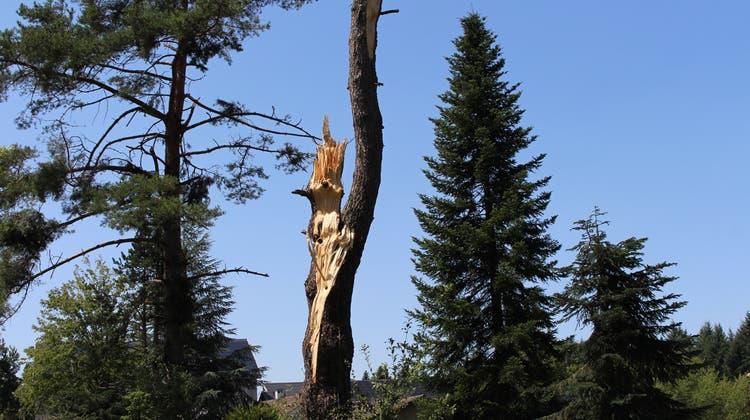 Dieser Baum steht direkt vor der Eidgenössischen Forschungsanstalt für Wald, Schnee und Landschaft (WSL) in Birmensdorf. Hier wurden die Bäume besonders hart vom Sturm getroffen. (Carmen Frei)
