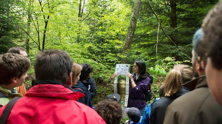 Teil des Netzwerks Schweizer Pärke: der NaturerlebnisparkJorat bei Lausanne. (Keystone)