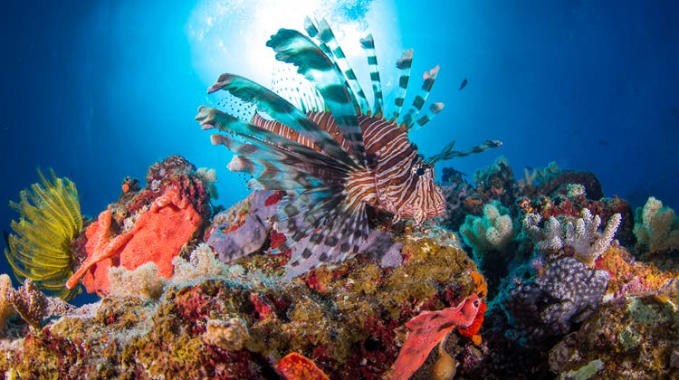 Wunderschön – und arg bedroht: Das australische Great Barrier Reef ist ein Tourismusmagnet – noch. (Jemma Craig / Getty Images)