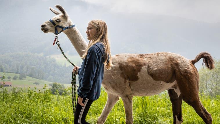 Ein gefühlvolles Trekking mit Lamas bei Mümliswil
