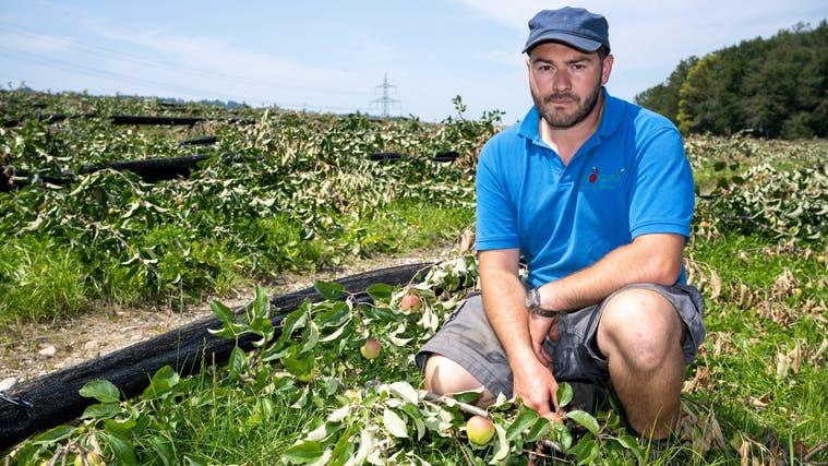 Insgesamt 8000 Bäumchen fielen Sturm Bernd zum Opfer: Markus Mörgeli auf seiner zerstörten Apfelplantage in Aesch. (Alex Spichale)