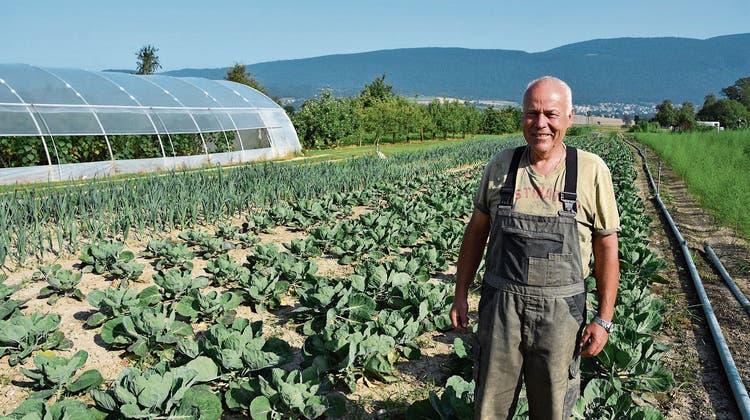 Gemüsebauern nach den Unwettern: Unter dem Strich noch zufrieden