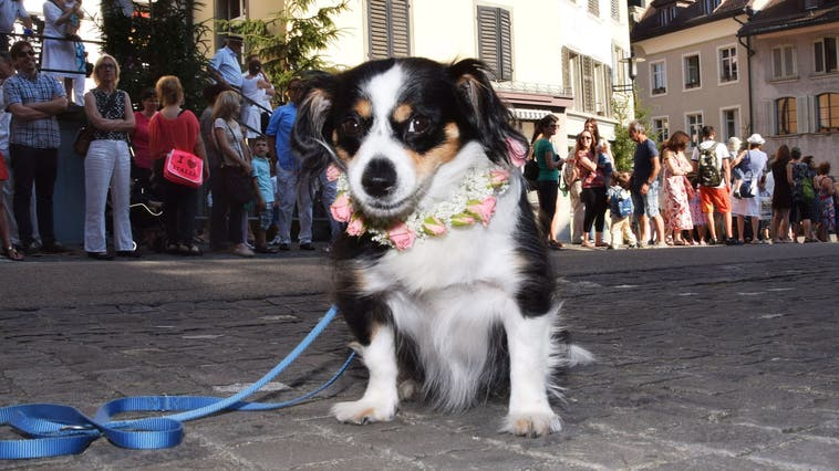 Brugg: Erster Jugendfesthund verstorben ++ Lupfig/Birr: Gülsha Adilji hält Festansprache