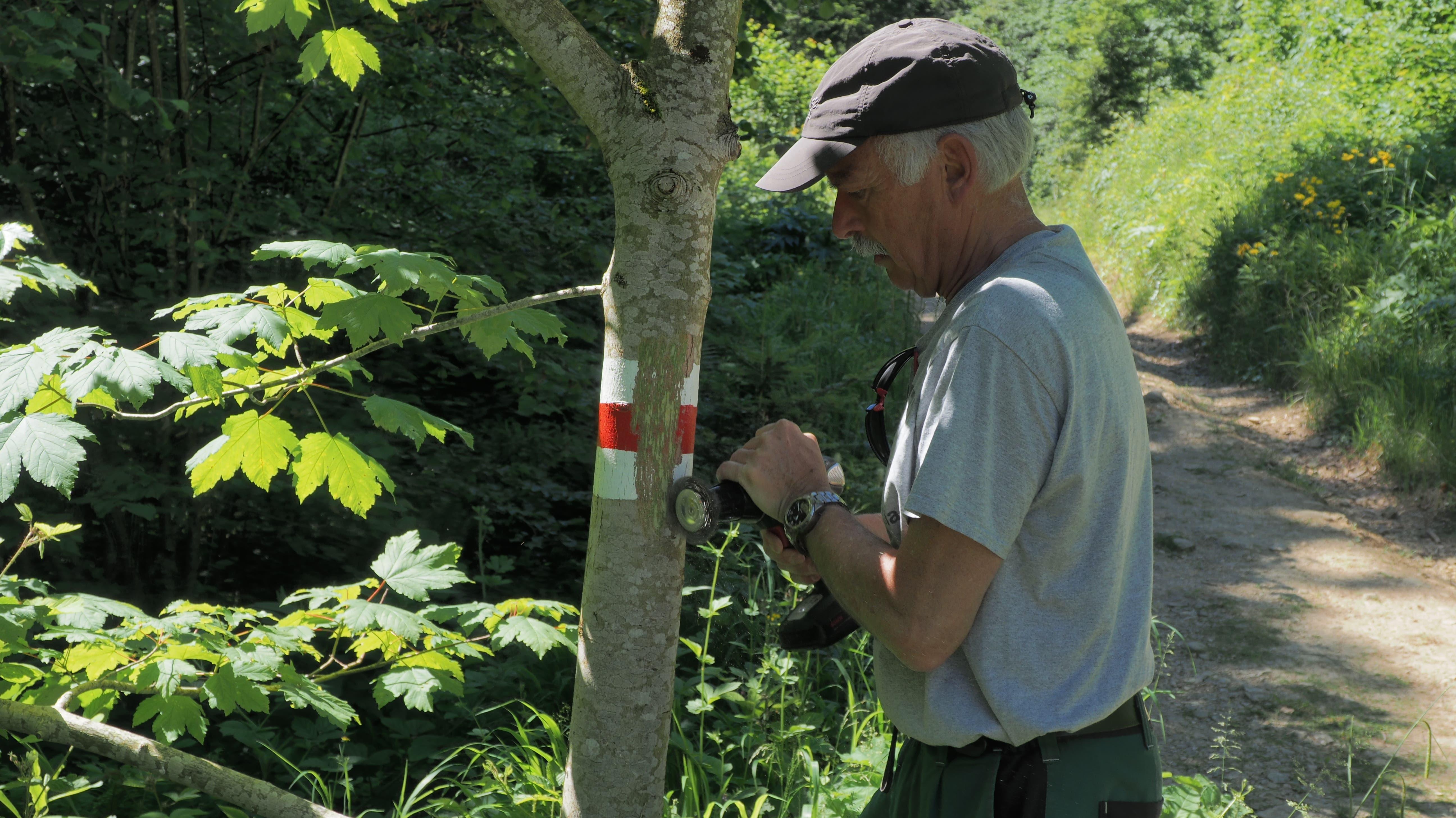 Schaub entfernt die weiss-rot-weisse Markierung an einem Baum...