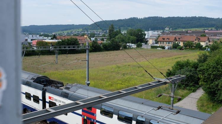 Auf dieser Wiese plant die Stadt Zürich sieben Fussballplätze in verschiedenen Grössen – Garderoben allerdings nicht. (Lukas Elser)