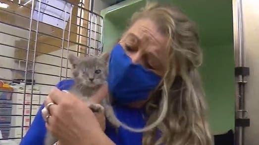 Aufnahmestopp droht: Überfüllte Tierheime nach Haustier-Boom