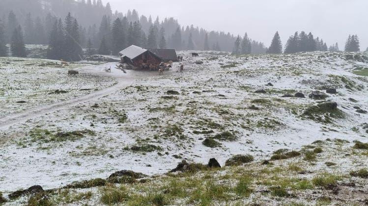 Nach Hagelschauer gibt es auf der Alp Sellamatt kein Futter mehr für Kühe und Rinder – «Würden wir sie nicht zufüttern, wären die Tiere sehr unzufrieden»