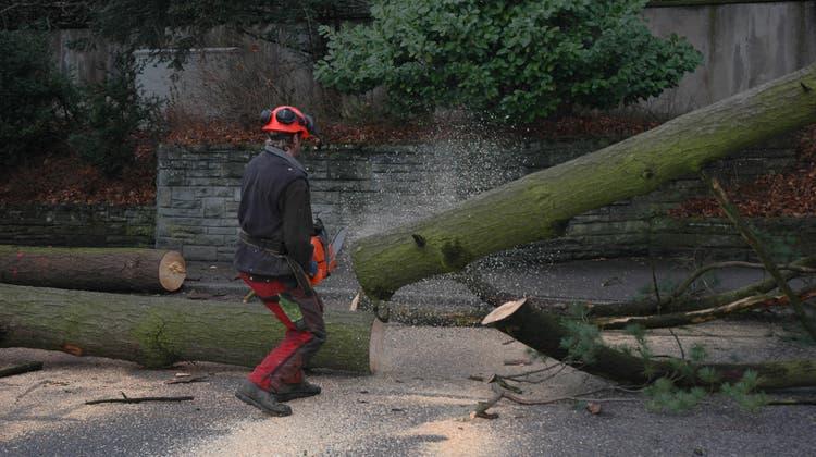Holzarbeiten auf Privatareal: Die Grünen fordern eine Bewilligungspflicht für private Baumfällungen (Archivbild). (Kaspar Haupt)