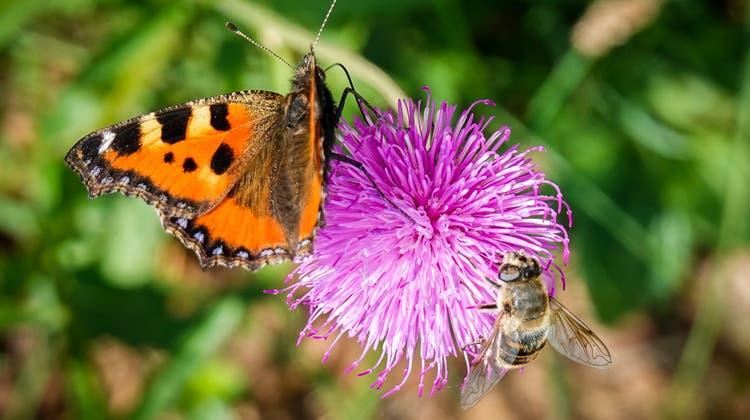 Unbekanntes Dazwischen: Auf der Wilkethöchidas Panorama geniessen und Schmetterlinge beobachten