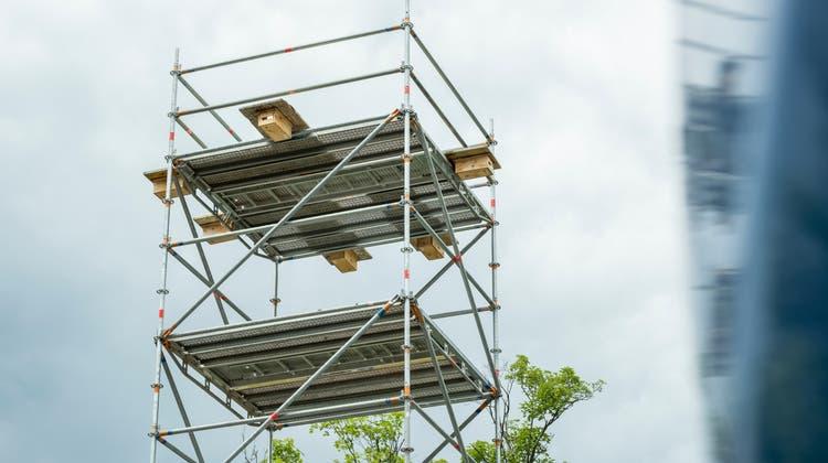 Auf dem Turm in St.Georgen wohnt jetzt tatsächlich eine Vogelfamilie: Ein Mauerseglerpaar hat sich in einem der sechs Brutkästen eingenistet. (Bild: Andri Vöhringer(1.7.2021))